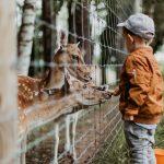 Zoopedagógia - az élmény a ragasztóanyag